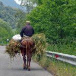 contadino su cavallo