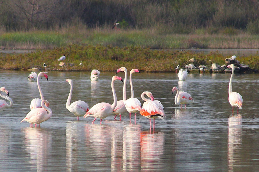 Walking to Torre Colimena and the flamingo of the monk's saltpan